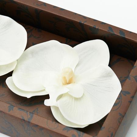 フラワーフレグランス(胡蝶蘭)
